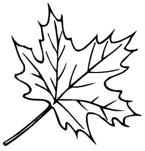 Кленовый лист раскраска