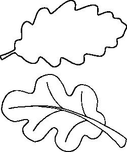 Дубовый лист раскраска